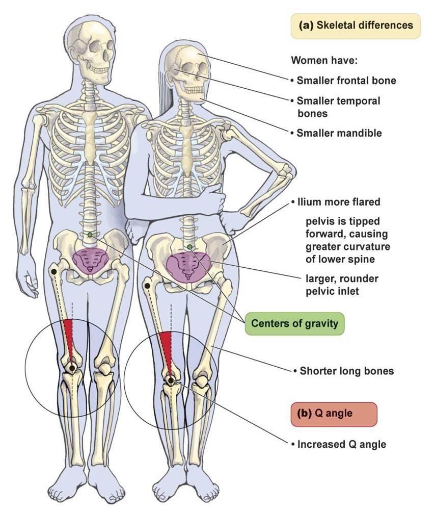 male vs female hip bones - Google Search | anatomy | Pinterest ...