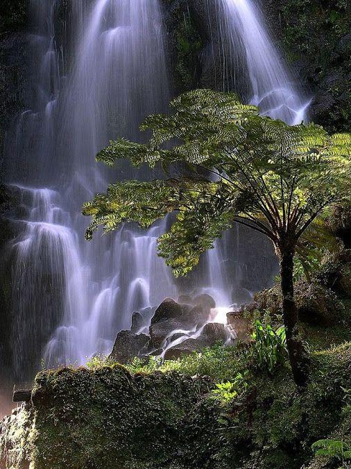 Achada, Azores, Portugal Please Follow: +Wonderful World