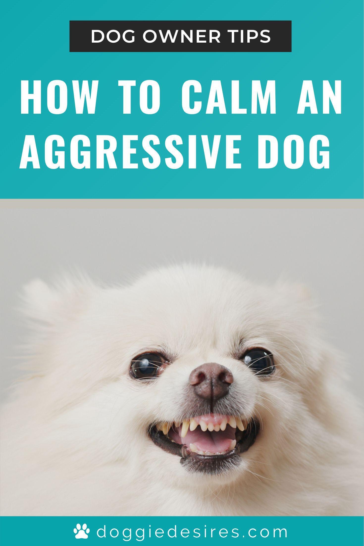 How To Calm An Aggressive Dog Doggie Desires Aggressive Dog Dogs Sick Dog