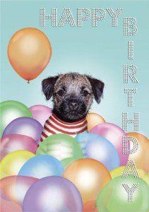 Border Terrier Birthday Card Google Sok Border Terrier Terrier Brown Dog