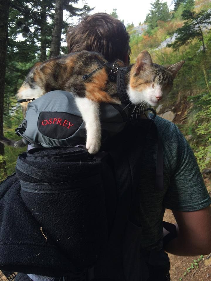 Honey Bee a Blind Calico Cat Goes Hiking - an international rescue story!  She not only survived surgery to remove her eyes, she's a true explorer.  Remarkable owners, too!