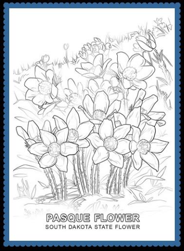 South Dakota State Flower - Pasque Flower by   South dakota and Usa ...