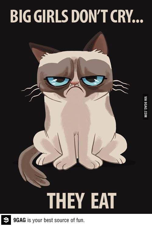 Dokładnie Grumpy Cat Humor Grumpy Cat Grumpy Cat Quotes