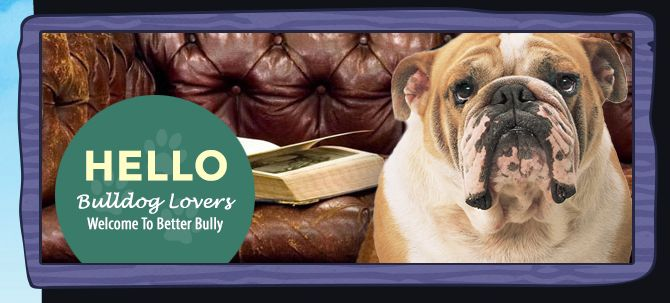 English bulldog Everything you want to know about English Bulldogs under one roof! Get English Bulldog tips, read articles on Bulldog health, read Bulldog Breeder Reviews. http://www.betterbully.com