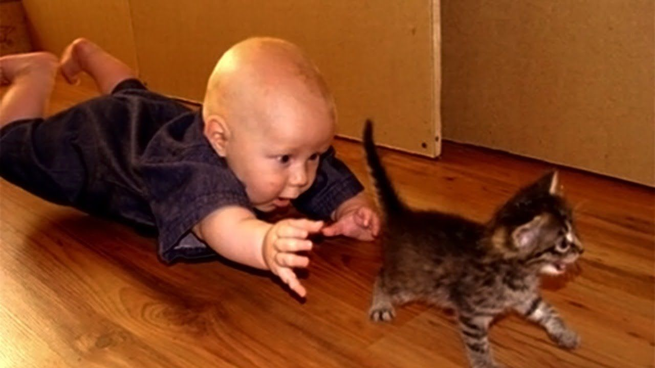 Cat Funny Videos 2020 Funny Cat Videos Funny Cats Funny Kid Fails