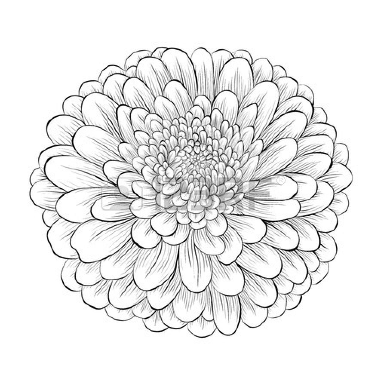 aster flower sept birth flower tattoo ideas = Pinterest