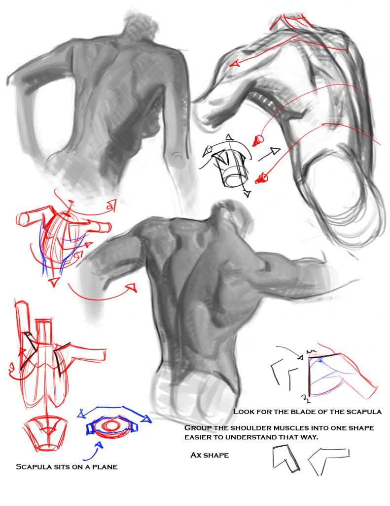 50% grey Folder of Drawing Tips and Tricks | General anatomy ...