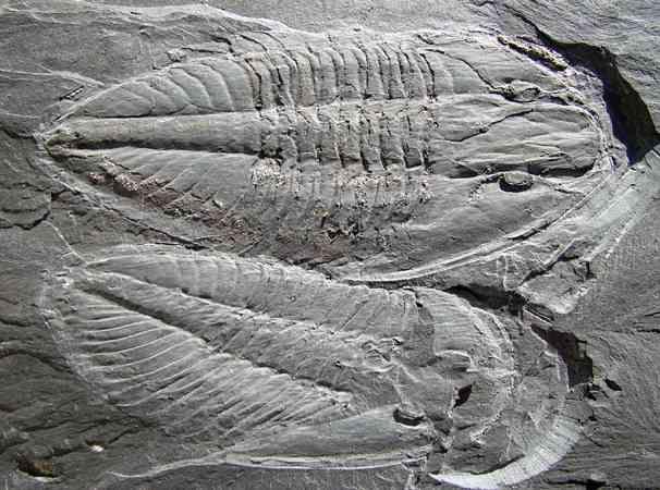 u gebruik maken Carbon dating op fossielen