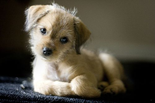 Too cute - Thinking of You by Destiny Guerra Photography, via Flickr