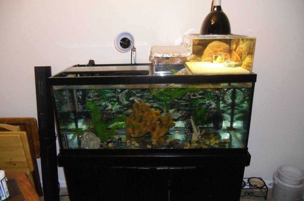Idea for crabs Turtle habitat, Turtle tank, Diy stuffed