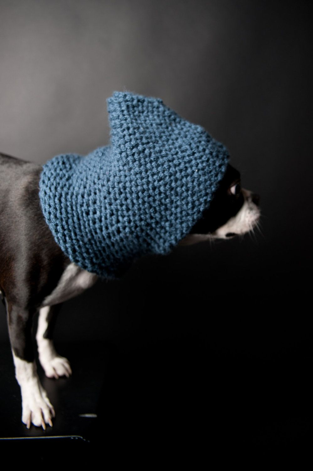 Blue Knitted Dog Snood   Dog snood, Baby dogs, Cute animals