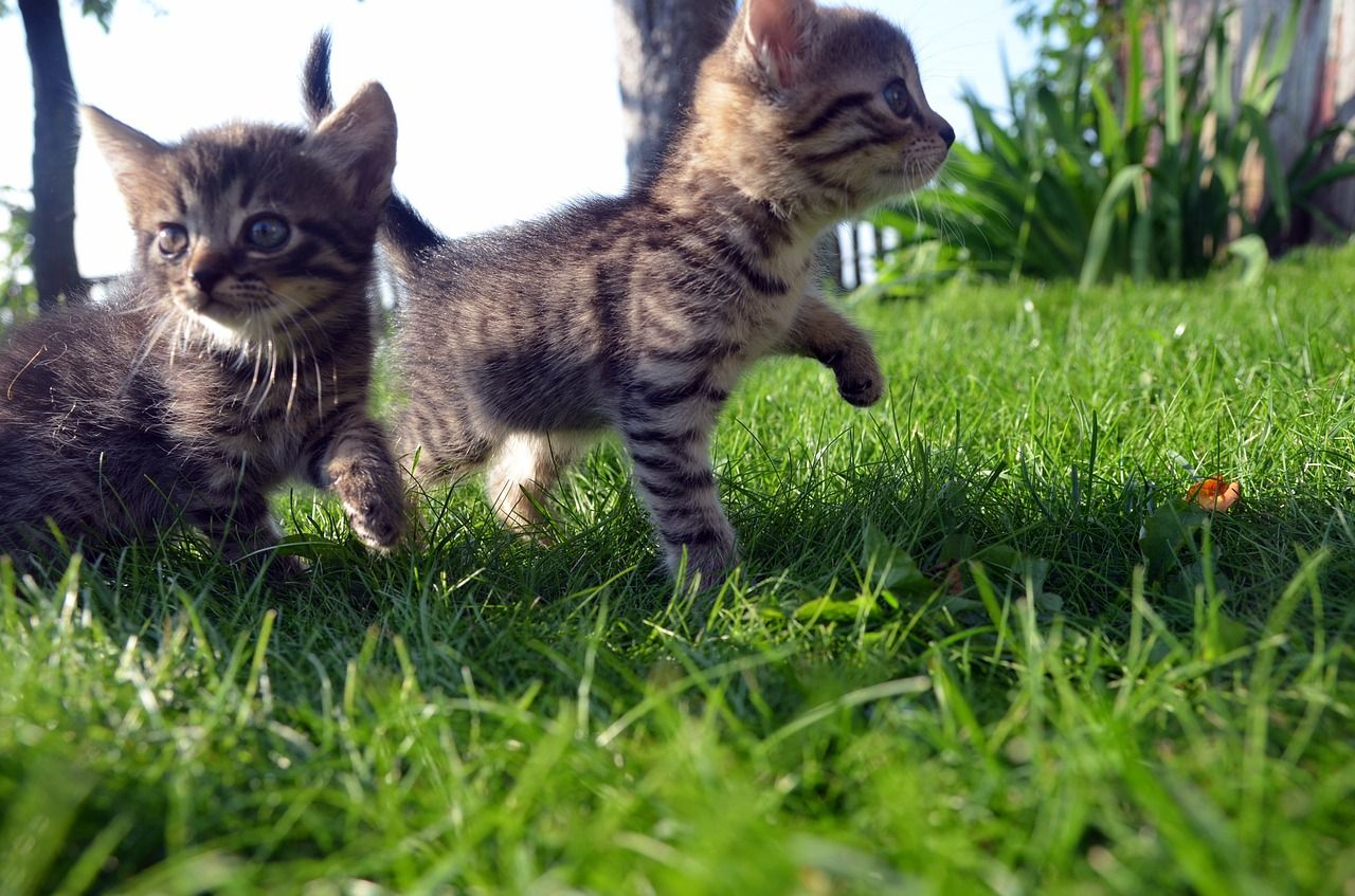 Who S A Smitten Kitten Everyone Loves A Cute Kitten We Do With Images Cat Safe Plants Happy Animals Cats