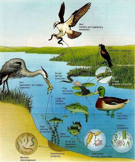Types of Ecosystems Freaky Frogs Pinterest English words
