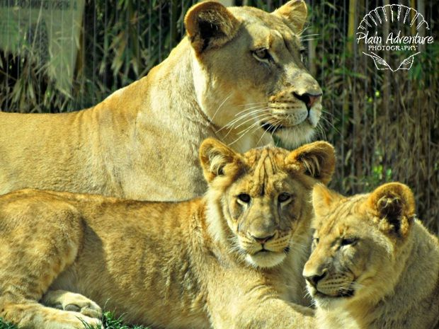 Reid Park Zoo Animals