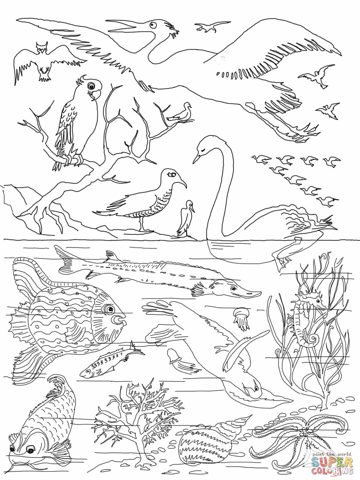 5th Day Of Creation Bible Coloring Pages
