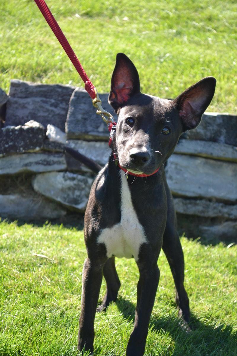Adopt Cornelia On Animals Dog Cat Pets