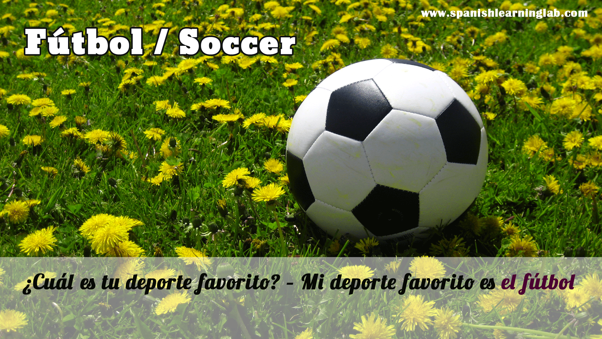 football soccer what is your favorite sport my favorite