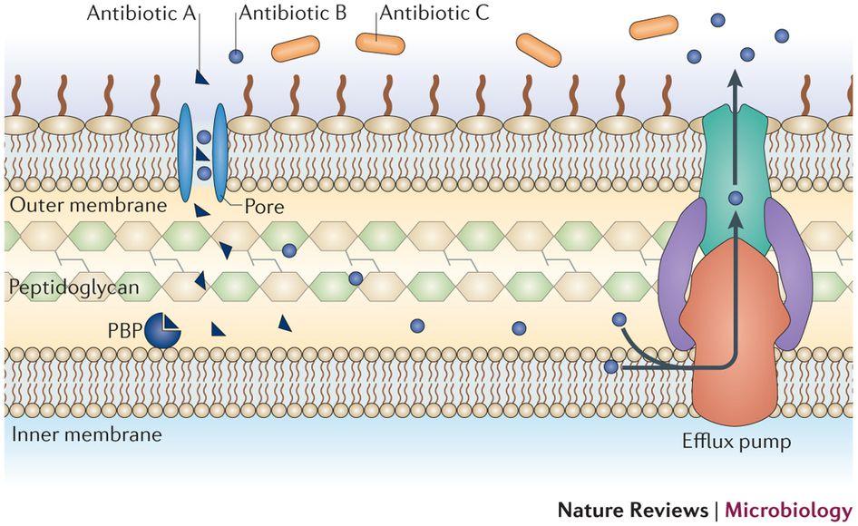 Molecular mechanisms of antibiotic resistance Antibiotic
