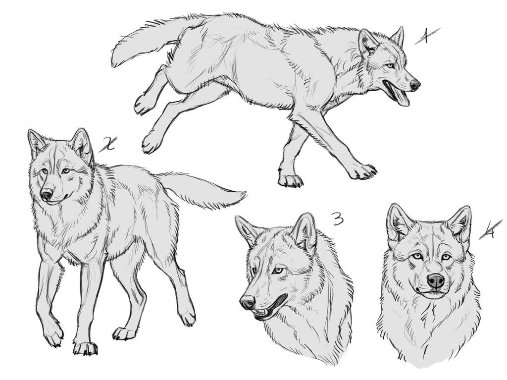 Ych Wolves 7 For Sale 1 Left By Makangeni Wolf Poses