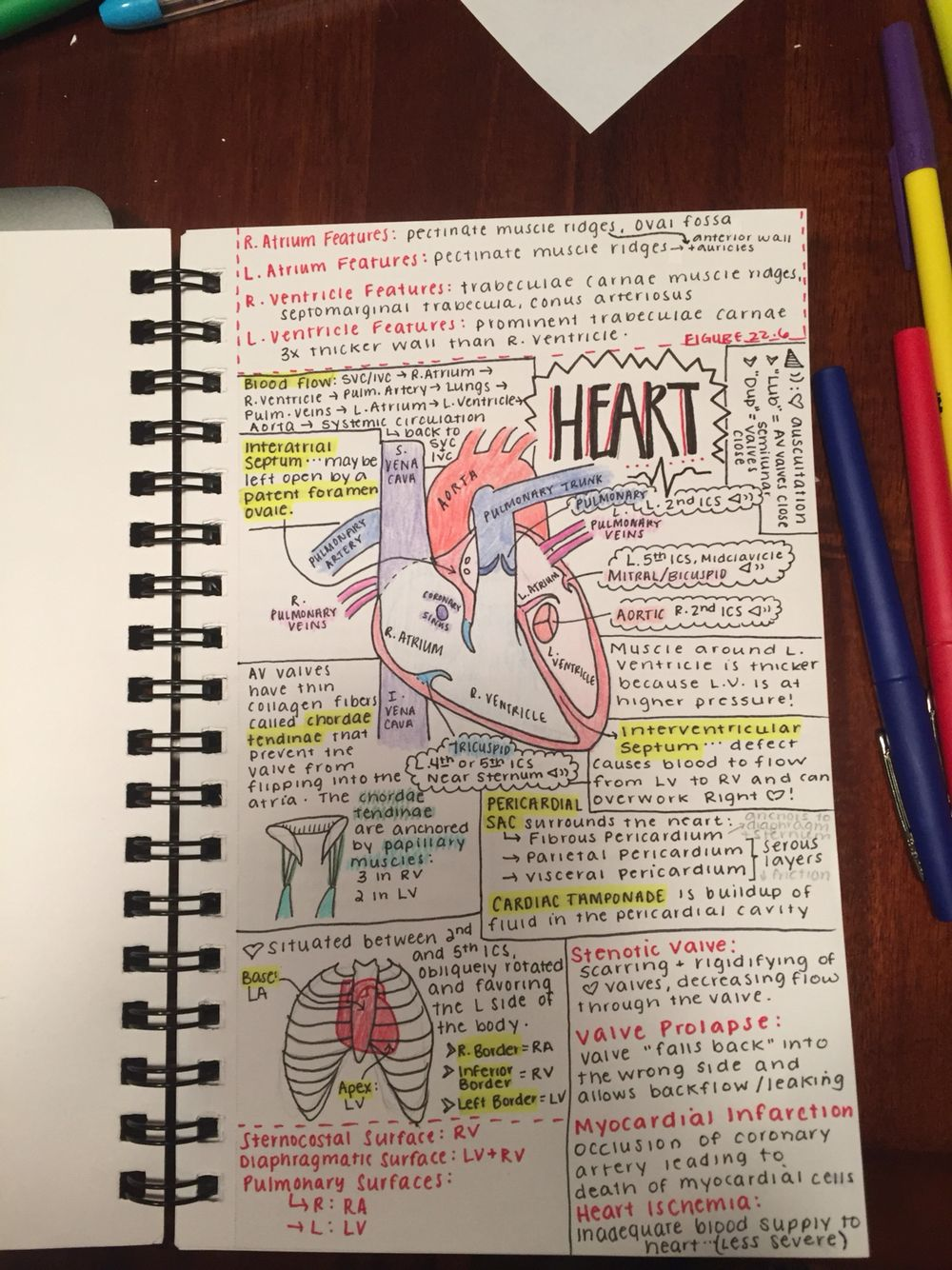Note Taking Strategy For Anatomy Class My Pins Pinterest