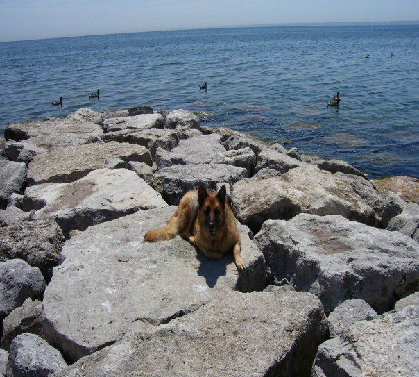 At The Burloak Waterfront Park With Akita It Is Located At The