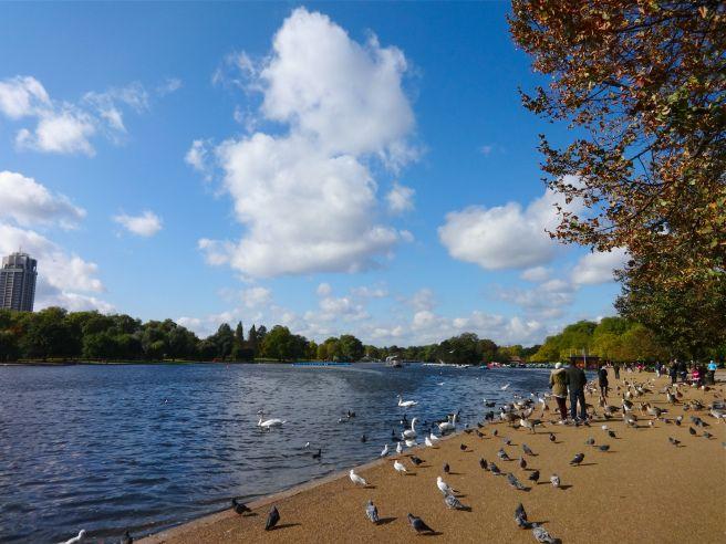 Swan Lake in Hyde Park
