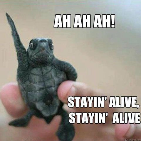 Funny Quotes And Pictures 35 Pics Bora Paris Funny Animal Memes Funny Animals Cute Funny Animals