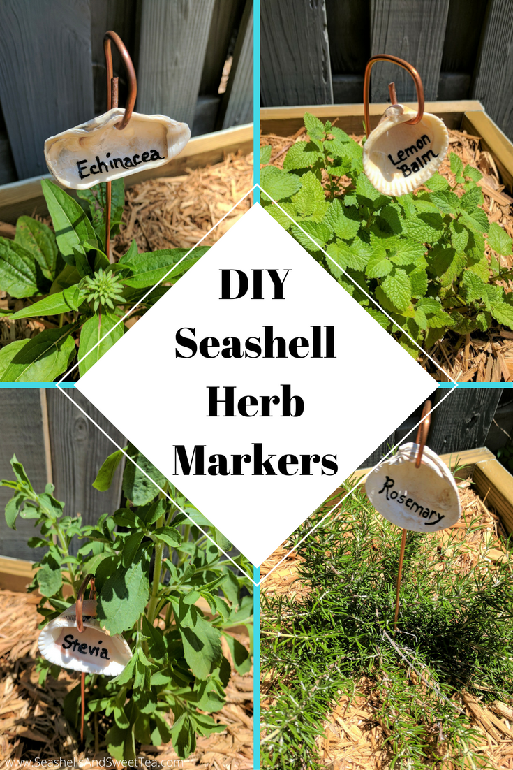 DIY Seashell Herb Markers   Markers, Herbs and Plants