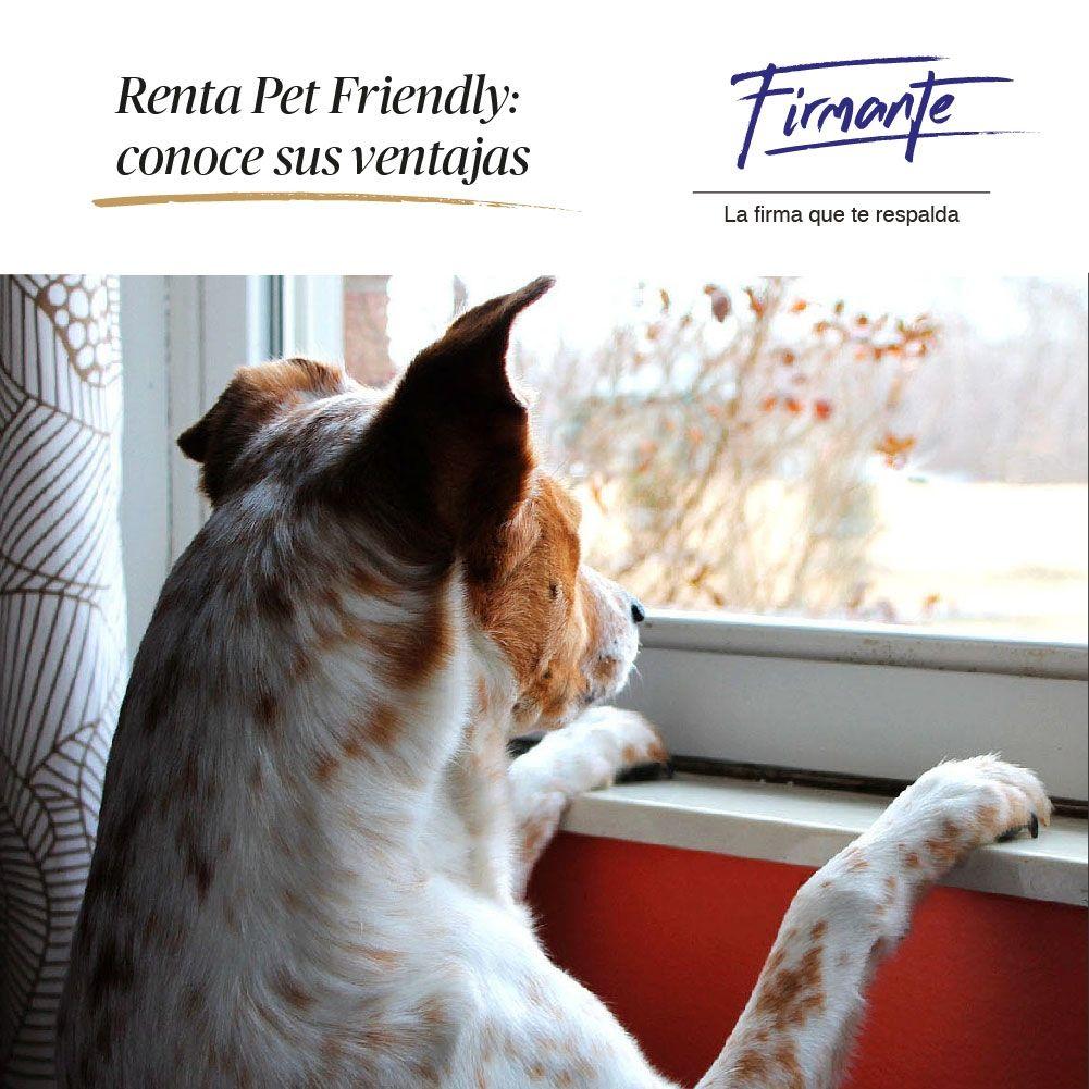 Ventajas Rentas En Menor Tiempo Puedes Ofertar En Un Precio Mas Competitivo Los Inquilinos Con Mascotas Bien Cuida Firmante Renta El Inquilino