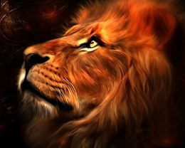 Abstract Lion Face Awesome Hd Wallpapers Free Download At