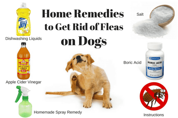 Natural Flea Repellent Home Remedy