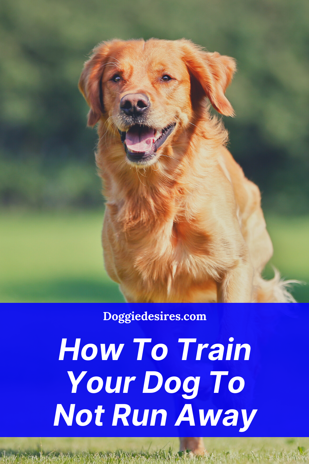How To Train Your Dog To Not Run Away In 2020 Training Your Dog Dogs Dog Care