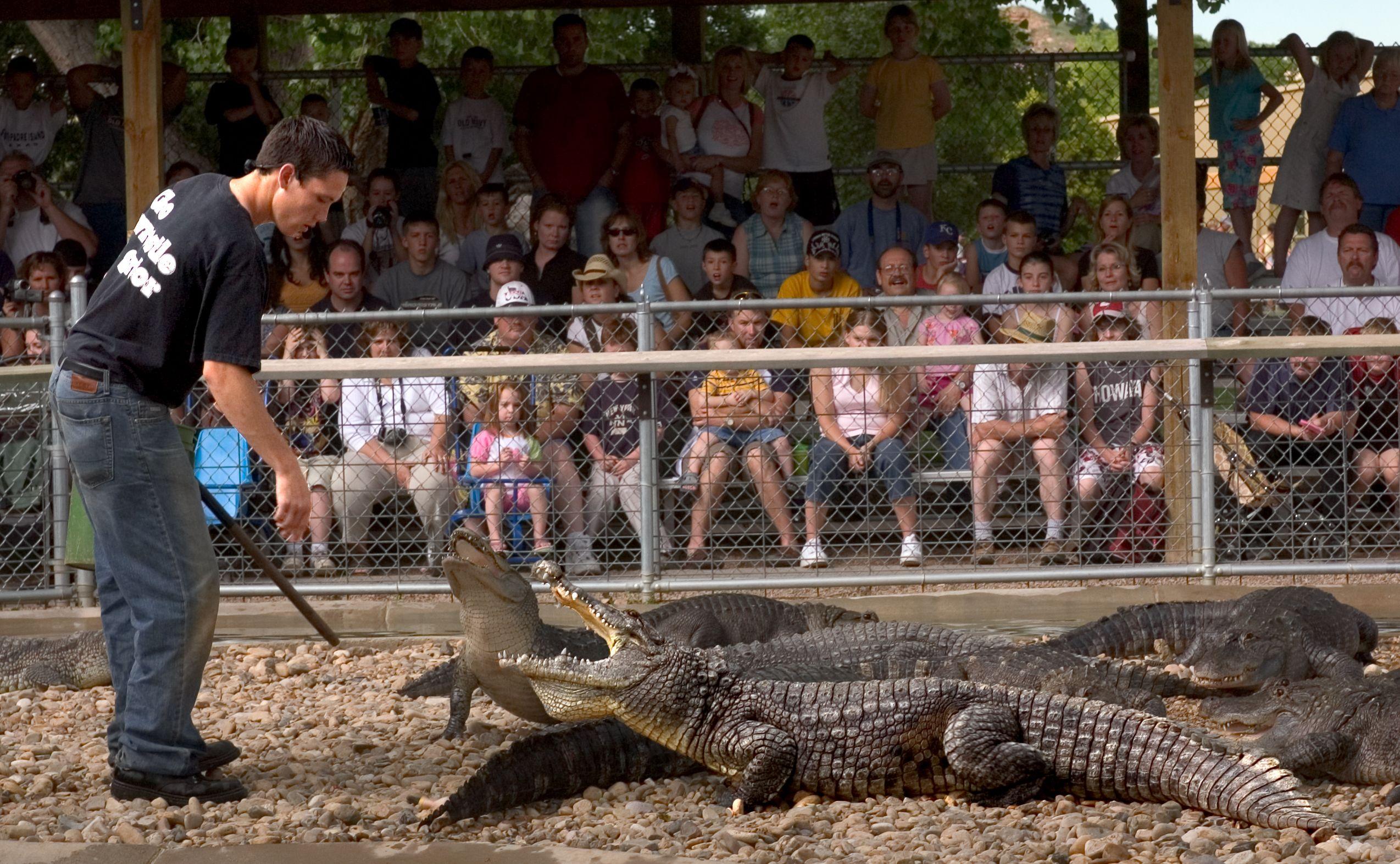 117b8c596251b5938e3eaf4850cdab76 - How Long Does Reptile Gardens Take