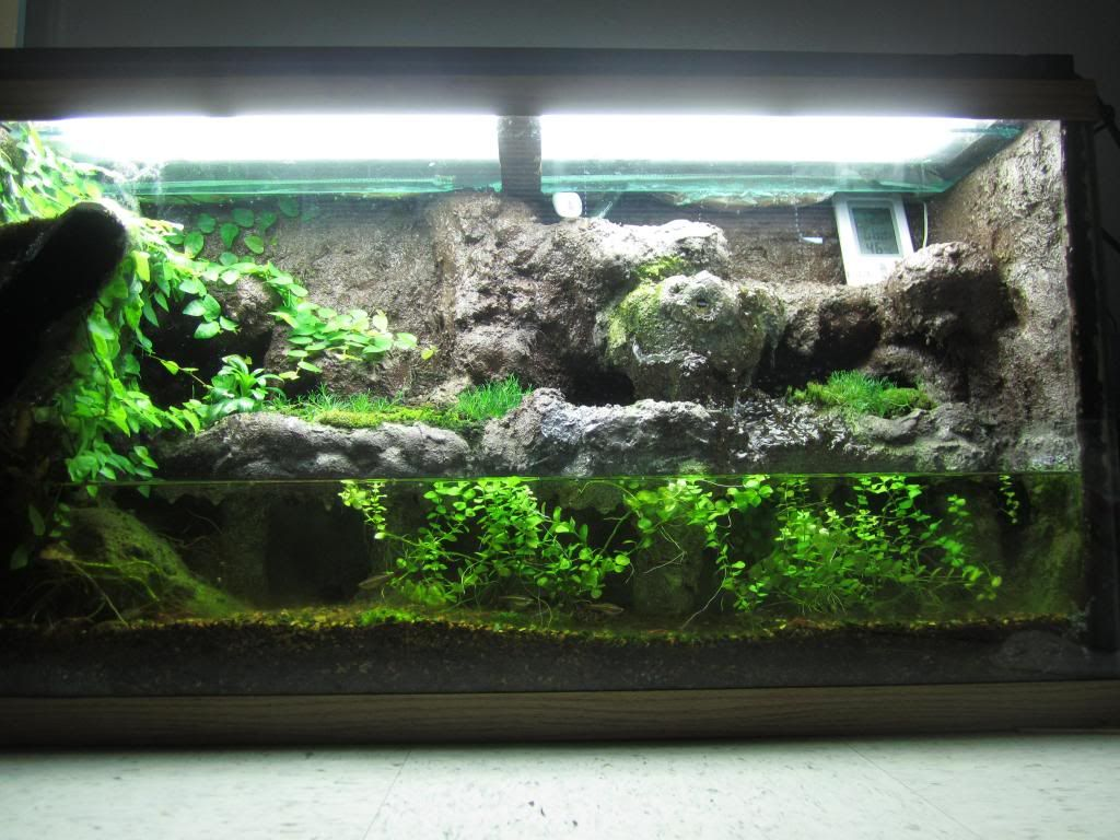 Click the image to open in full size. | Fish tanks ... 10 Gallon Paludarium