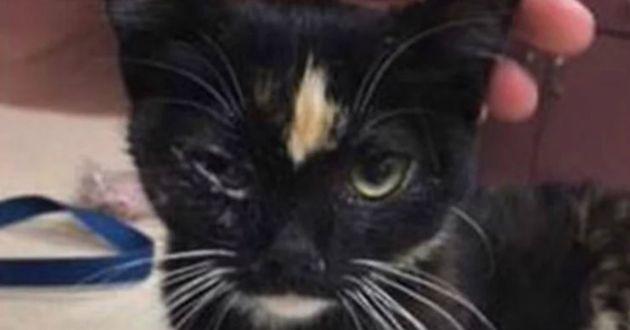 noir chatte battant