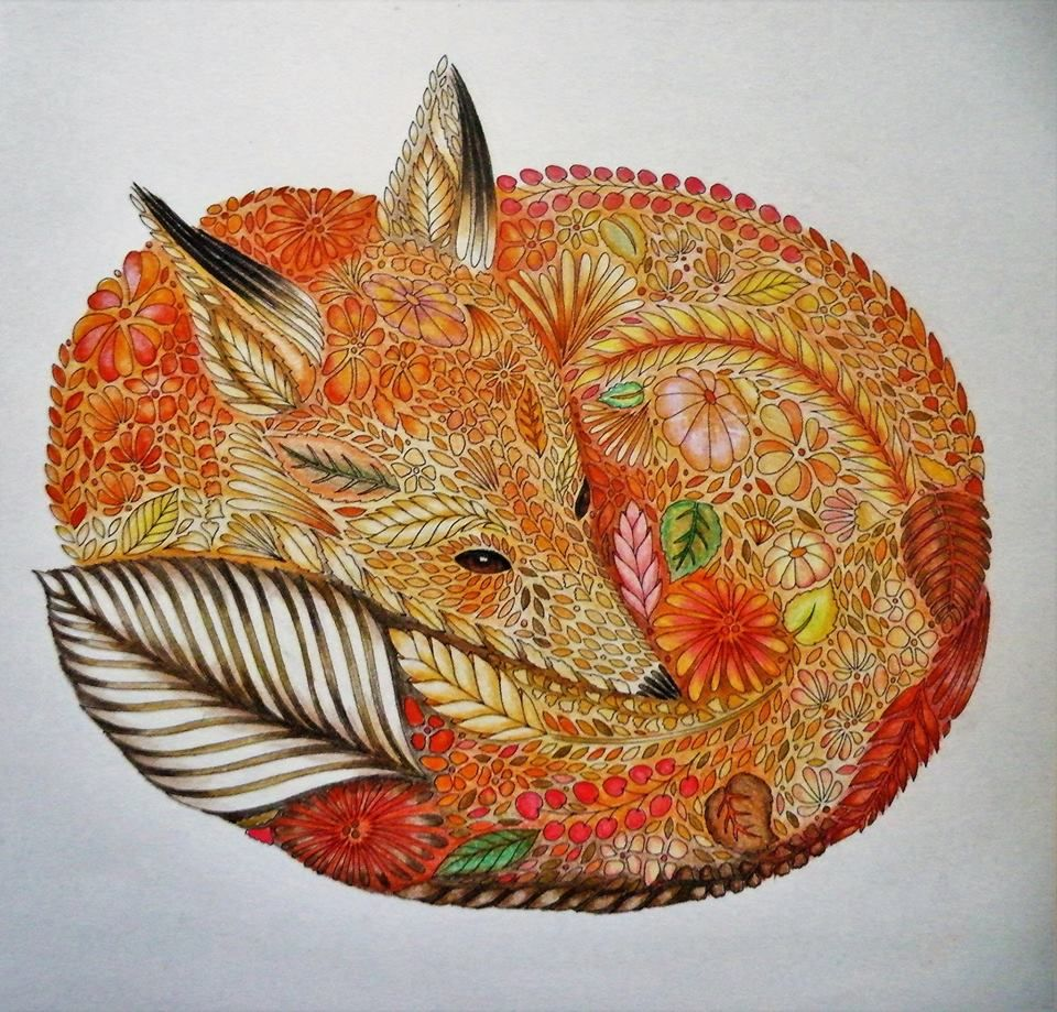 Coloring Ideas Fox Animal Kingdom Colouring Book Millie Marotta Animal Kingdom Millie Marotta Coloring Book