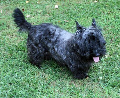 Adopt Baydee On Pets Pet Adoption Terrier Rescue