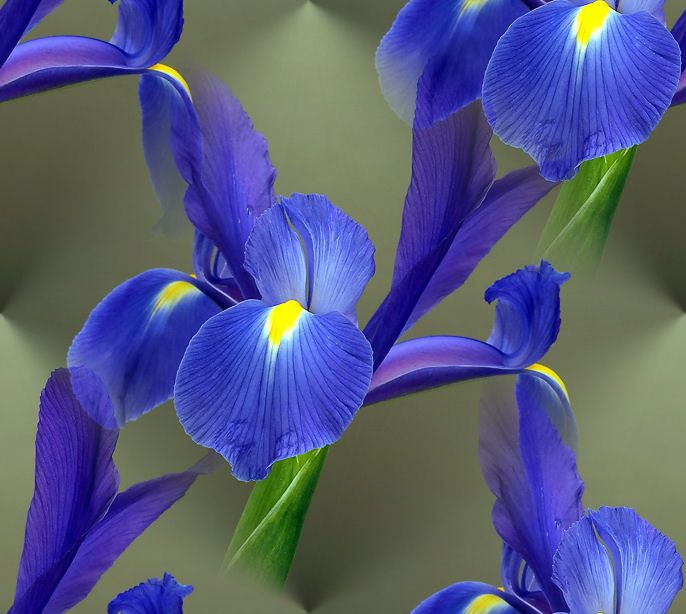 Irises Purple Flowers Garden Iris Flowers Flower Meanings