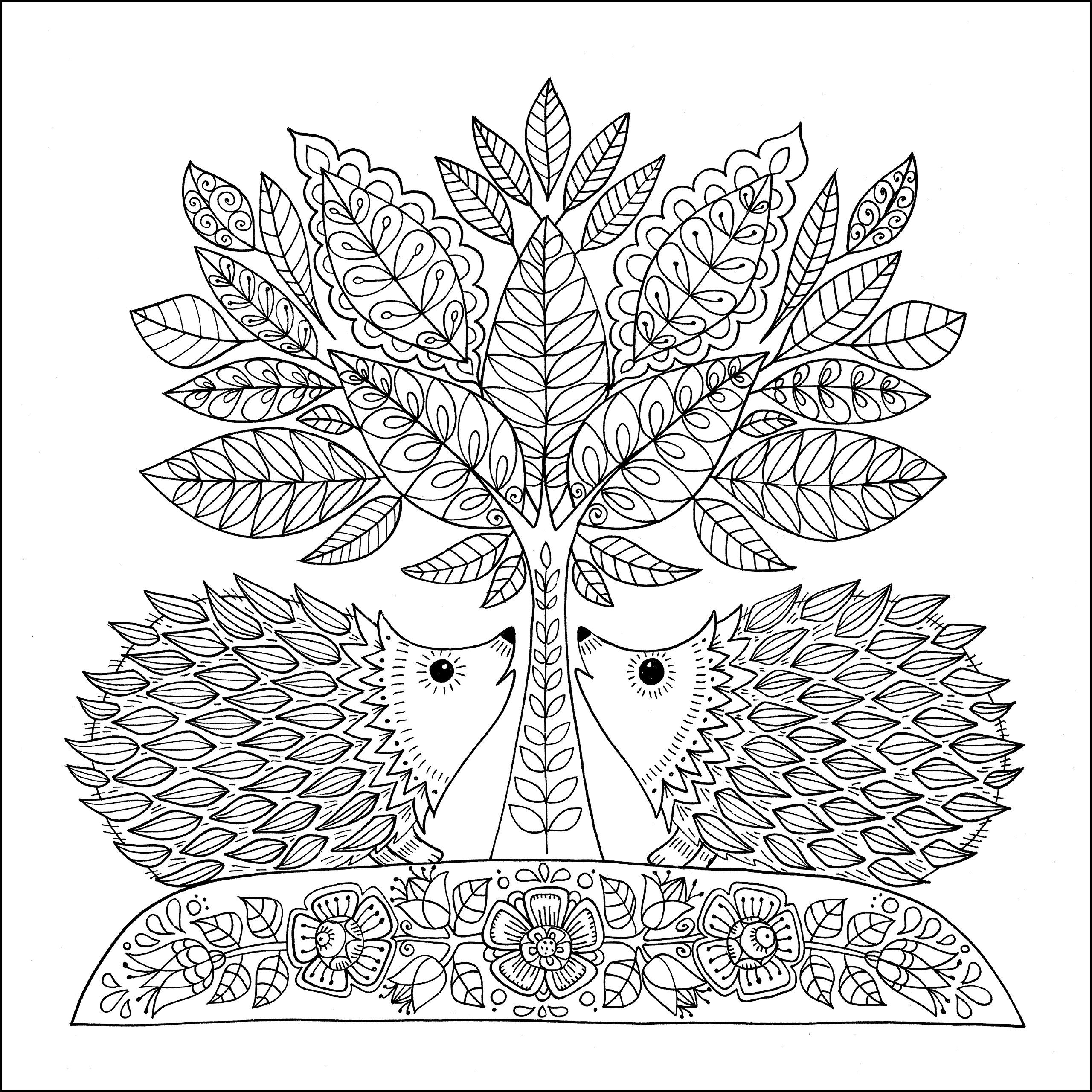 Wonders of Creation Coloring Book: Illustrations to Color and ...