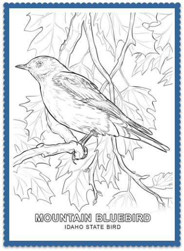 State Bird Coloring Pages By Usa Facts For Kids Bird Coloring Pages Animal Coloring Pages Coloring Pages