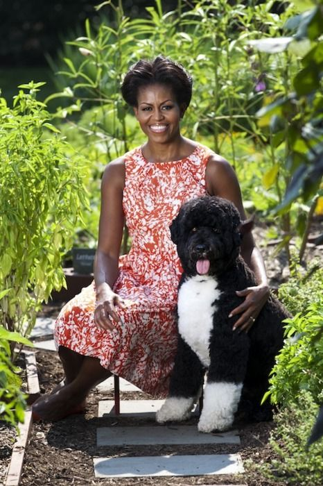 Portrait of the First Lady and Bo
