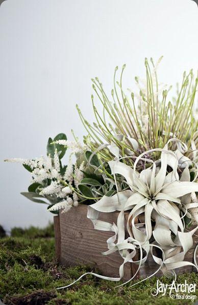 Lovely design using tillandsia.  Jay Archer Floral Design