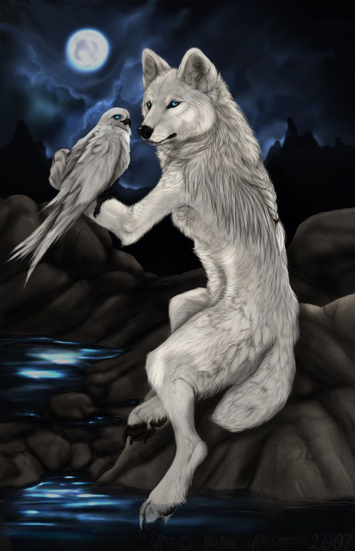 White dhole by yellow eyes on deviantart canines foxes