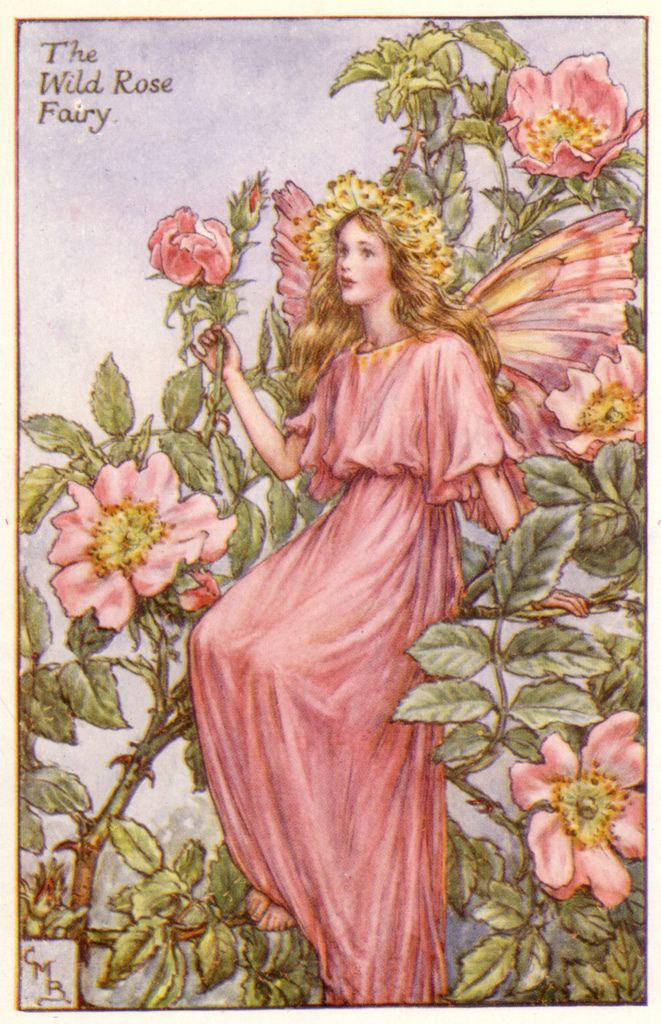 The Wild Rose Fairy Rose Fairy Summer Fairy Flower Fairies