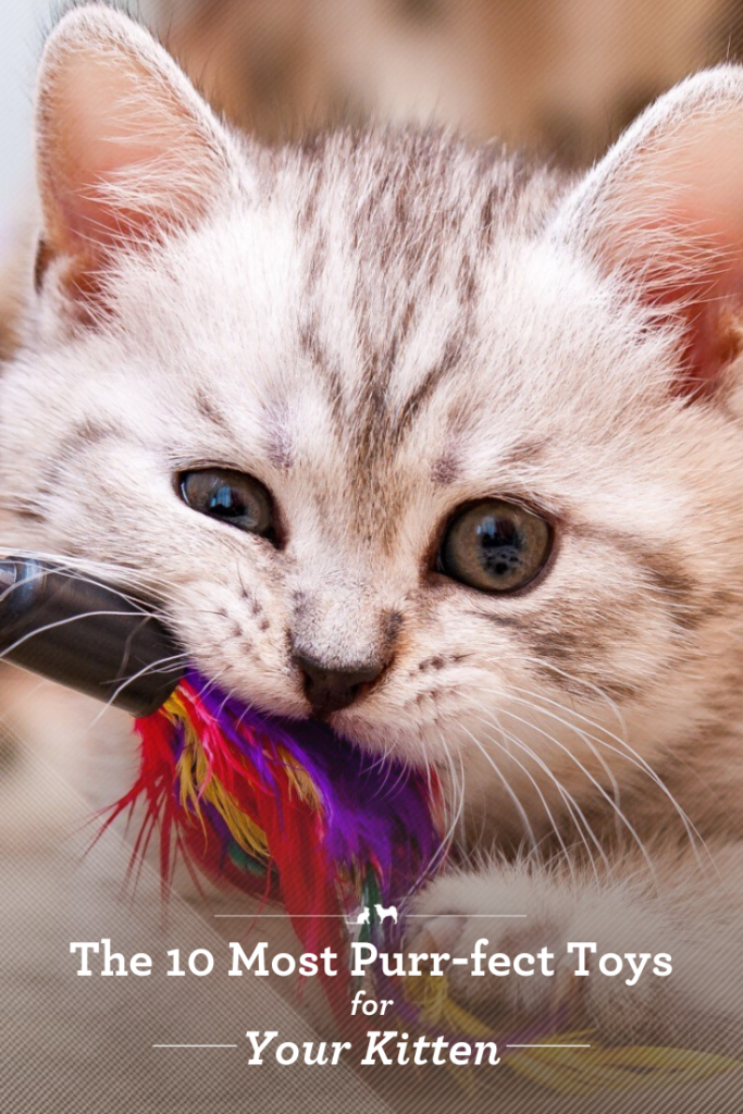 The 10 Most Purr Fect Toys For Your Kitten In 2020 Best Kitten Toys Kitten Toys Kitten