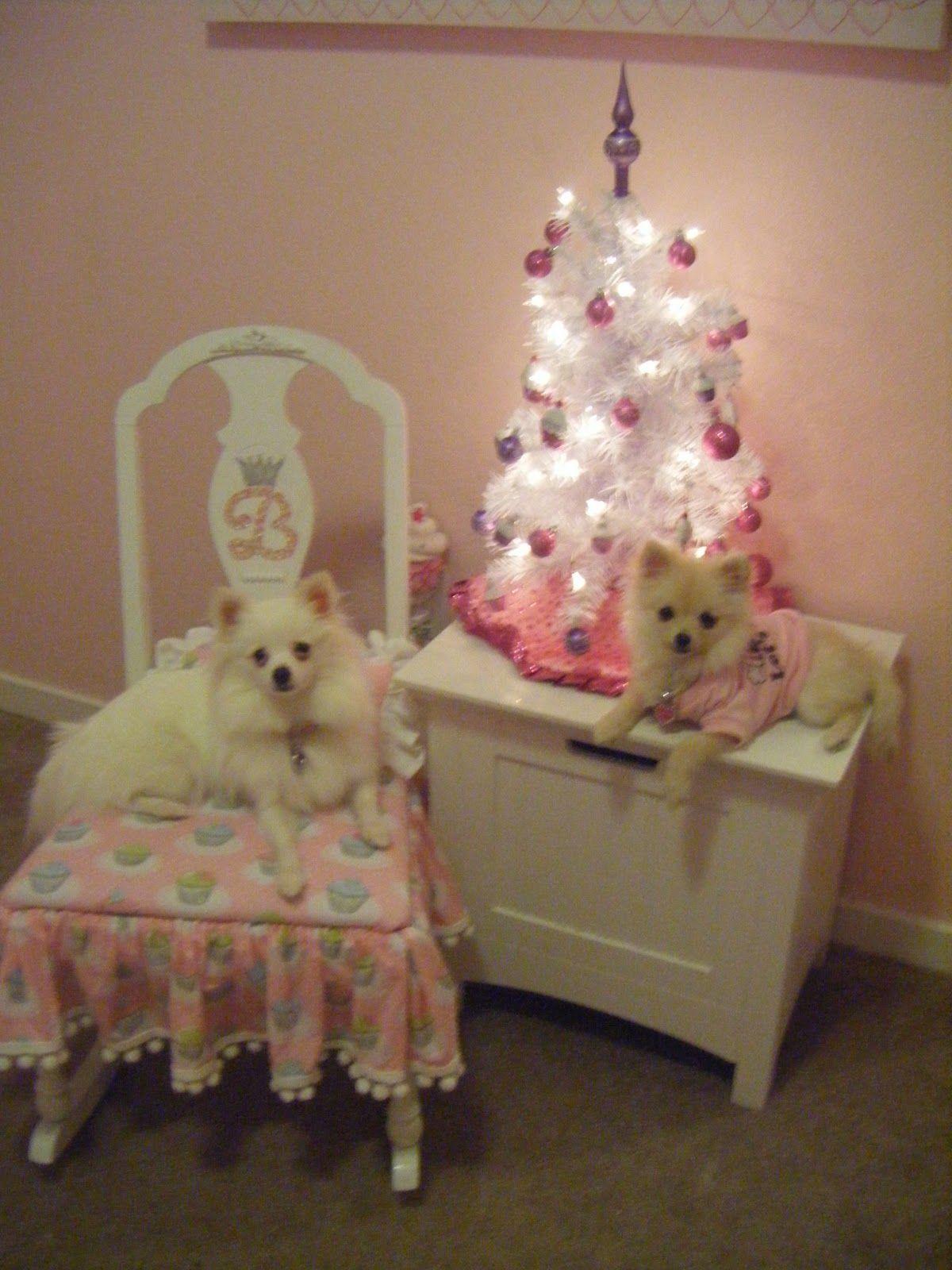 Christmas puppy, Pomeranian, Pet birds