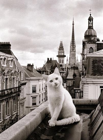 Photo of 25 fotos absolutamente impresionantes de gatos en lugares hermosos de todo el mundo