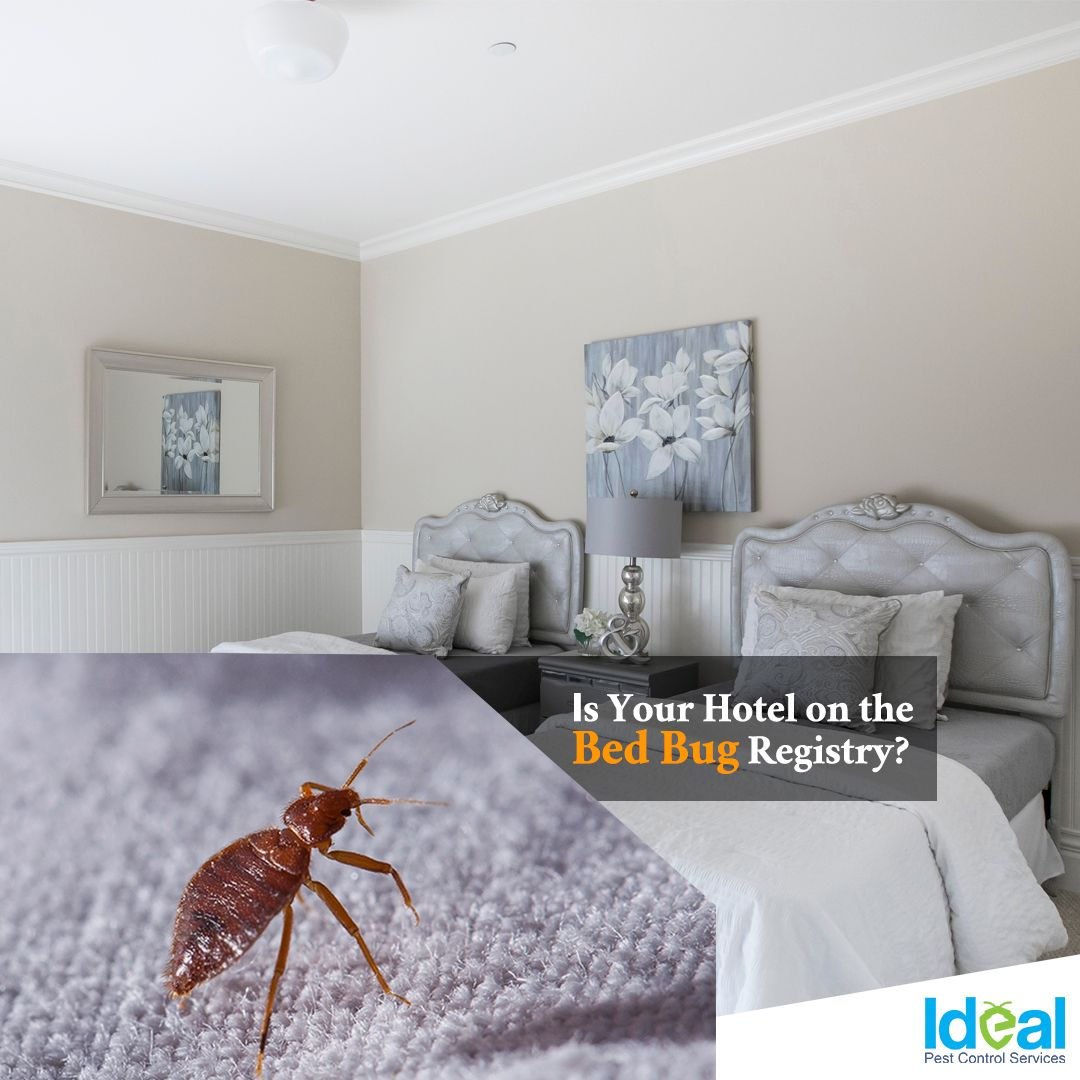 Where Do Bed Bugs Hide D A L Pest Control Bed Bugs Rid Of Bed Bugs Bed Bug Spray