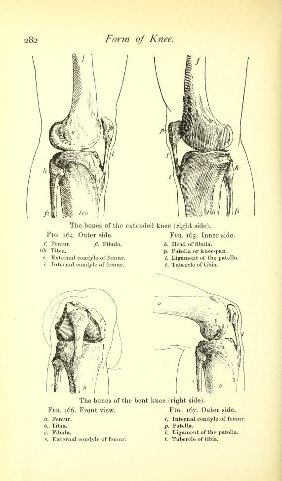 Form of the knee. From: \