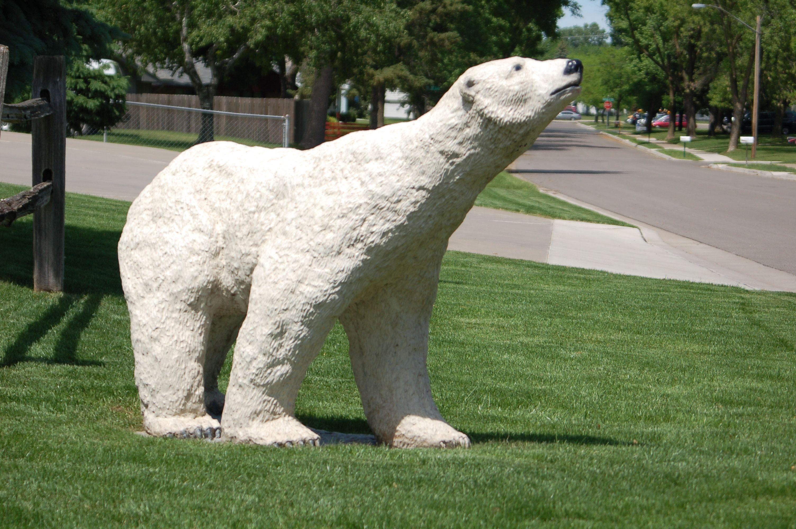 Bears White Bear Lake Park Rapids White Bear